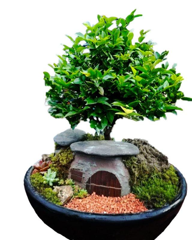 Cómo sembrar un bonsai reedirigiendo a ebani colombia