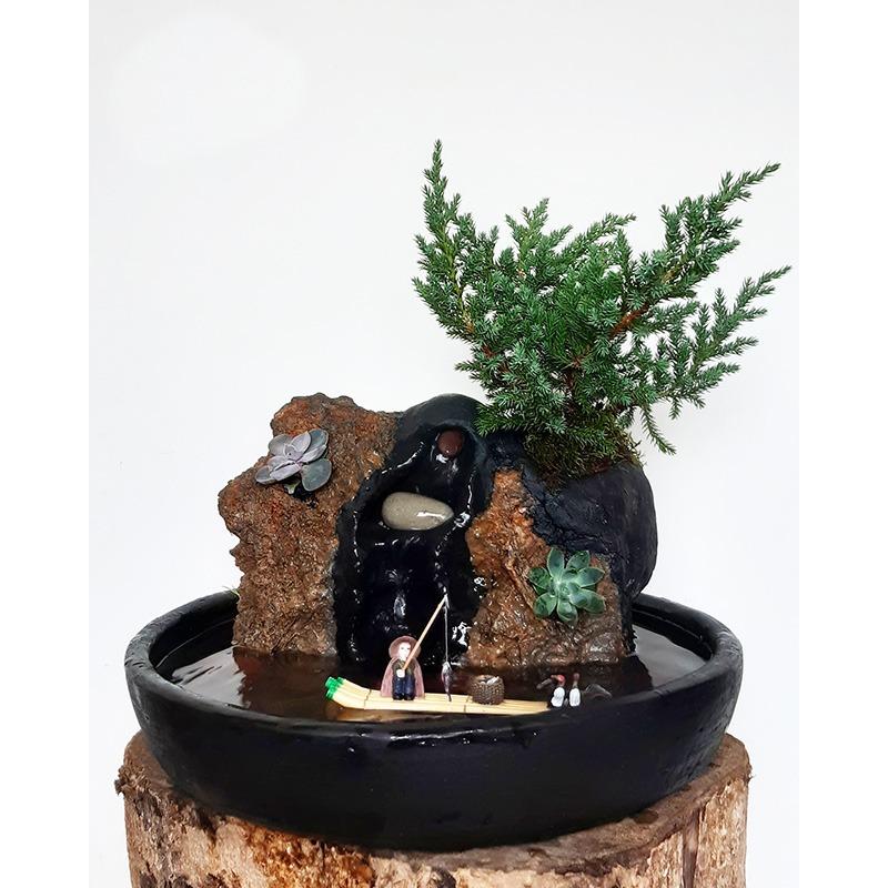como sembrar un bonsai ebani decoracion marketplace colombia