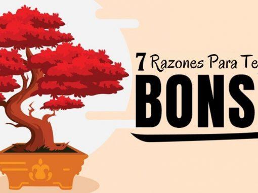 7 razones por las que todos deberían tener un bonsai
