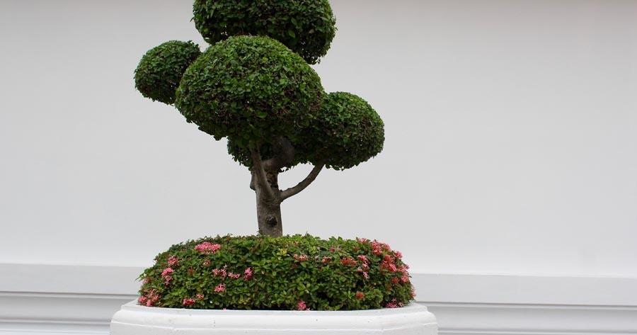 Jardín Zen con Arbol bonsai podado