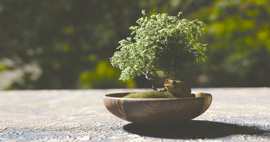 arbol bonsai en las afueras recibiendo el sol