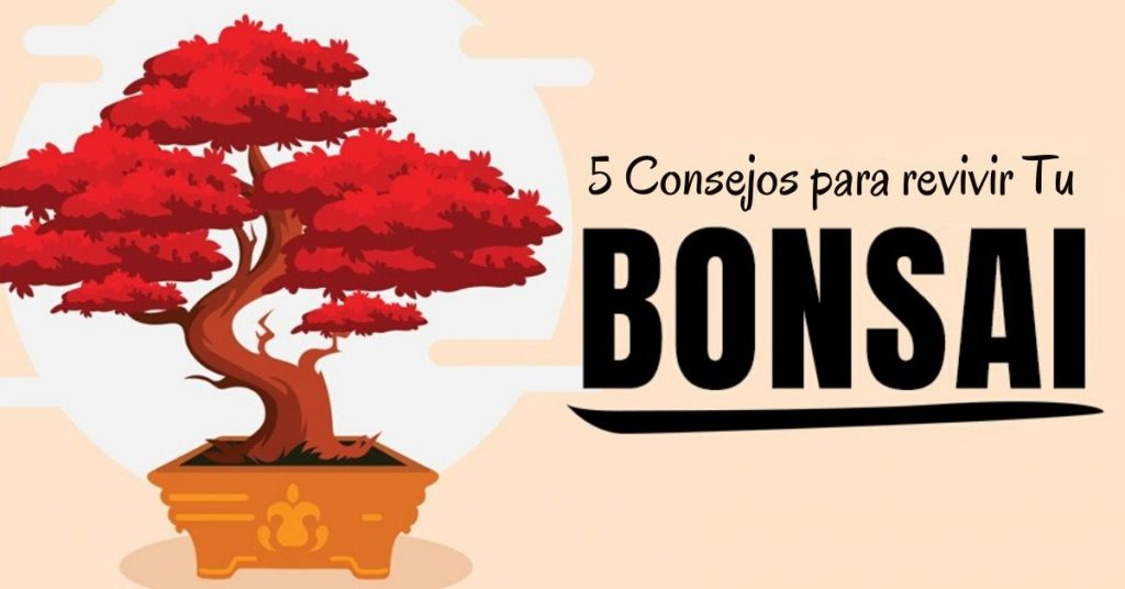 5 consejos para revivir tu bonsai